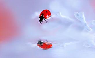 Фото бесплатно божья коровка, насекомое, макро