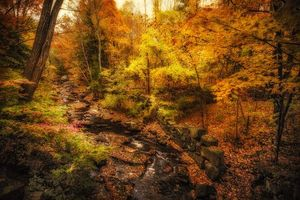 Бесплатные фото осень,лес,речка,деревья,пейзаж