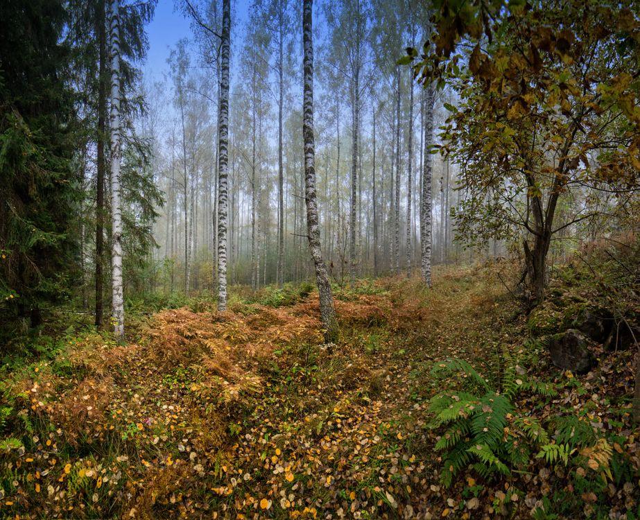 Бесплатная заставка лес, природа