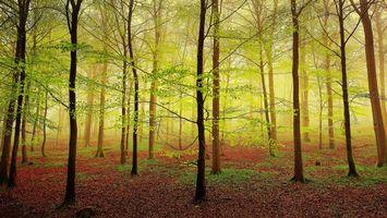 Бесплатные фото лес,деревья,туман,природа,пейзаж