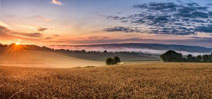Бесплатные фото закат,поле,колосья,пейзаж