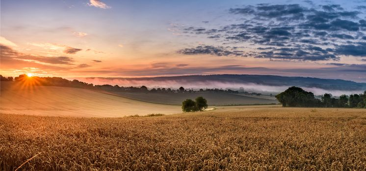 Photo of the sunset, the corn online for free