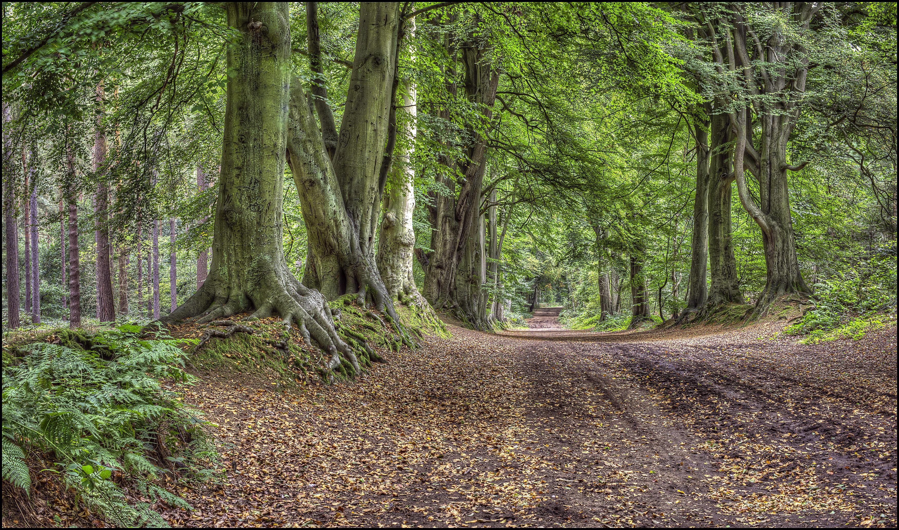 Обои лес, парк, деревья, дорога