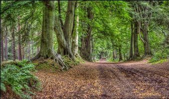 Фото бесплатно лес, парк, деревья, дорога, пейзаж