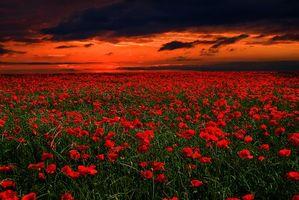 Бесплатные фото поле, маки, цветы, небо, закат, пейзаж