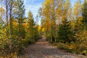 Фото бесплатно осень, лес, деревья, тропинка, природа