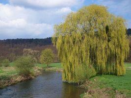 Бесплатные фото река, деревья, поле, тропинка, пейзаж