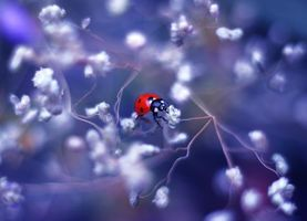 Photo on phone flower, ladybug