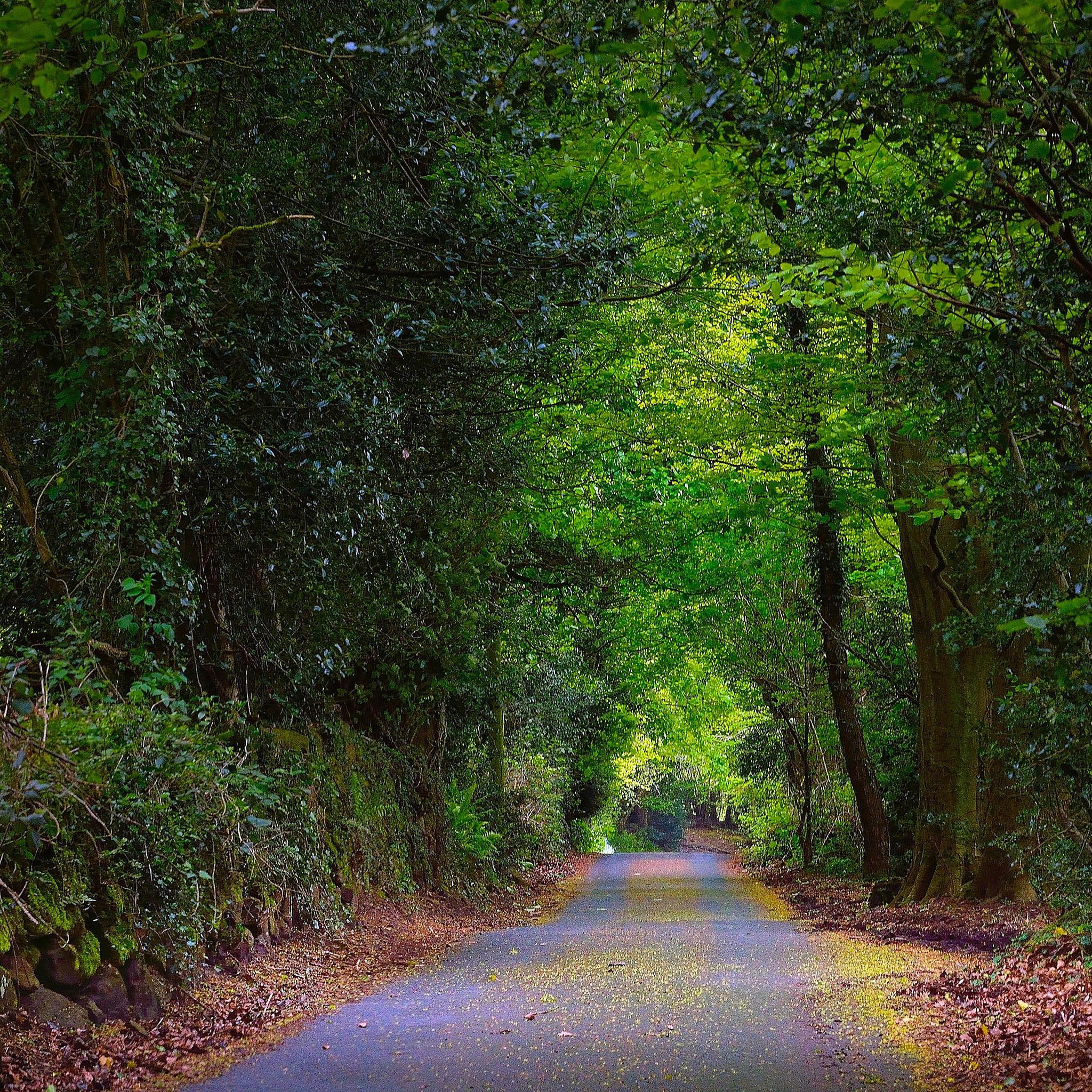 дорога в лесу вертикальные картинки стоит отметить