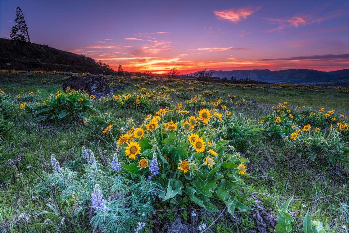 Фото бесплатно Oregon, закат, холмы, цветы, горы, пейзаж, пейзажи