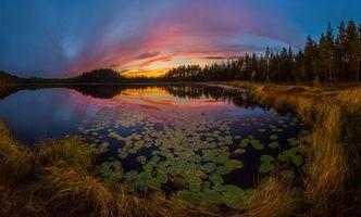 Заставки лес, озеро, закат