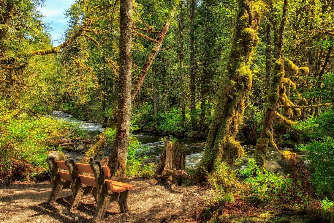 Фото бесплатно Wallace River, Washington, United States, пейзажи - скачать на рабочий стол