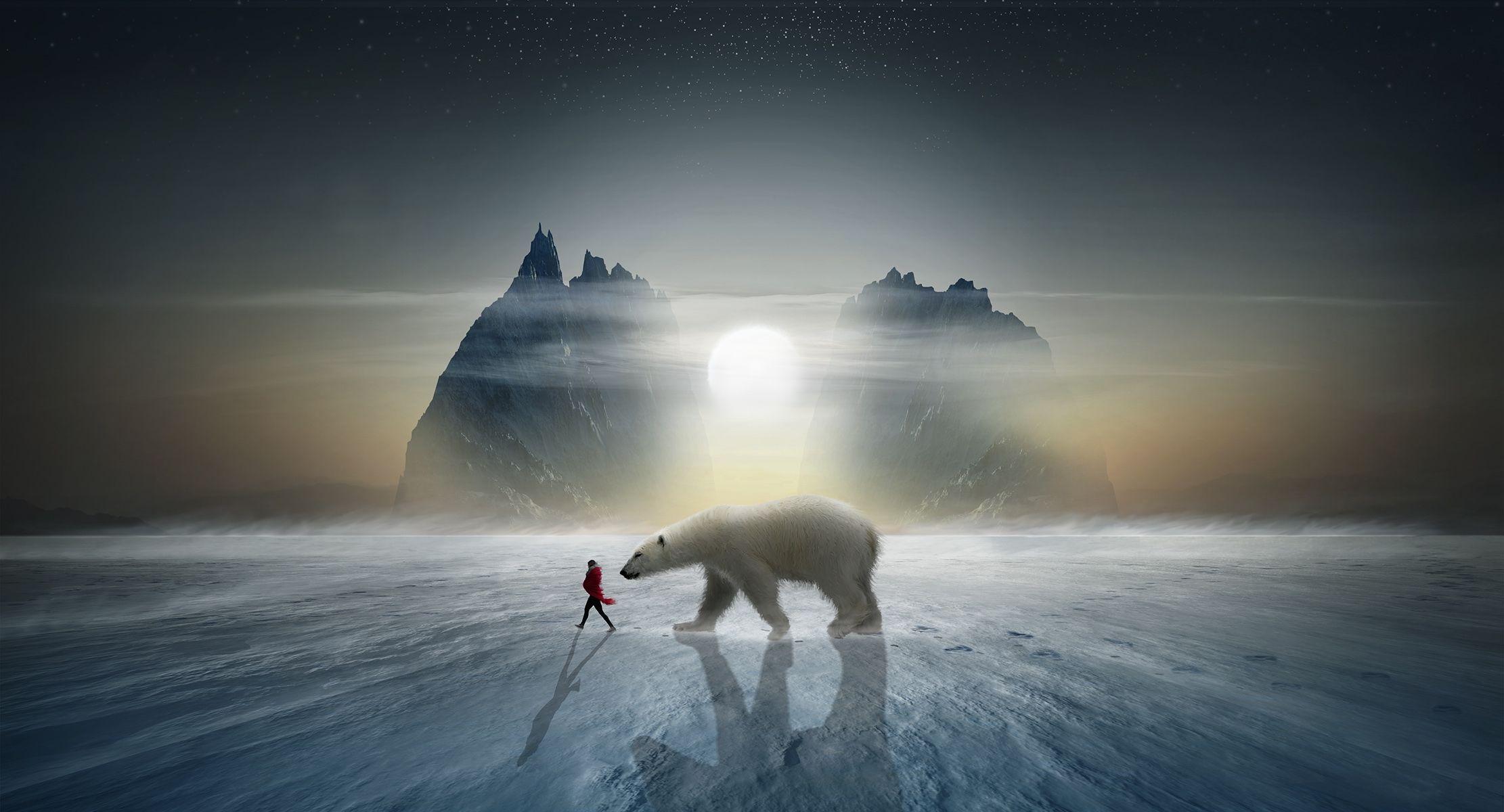 Обои закат, зима, северный полюс, белый медведь