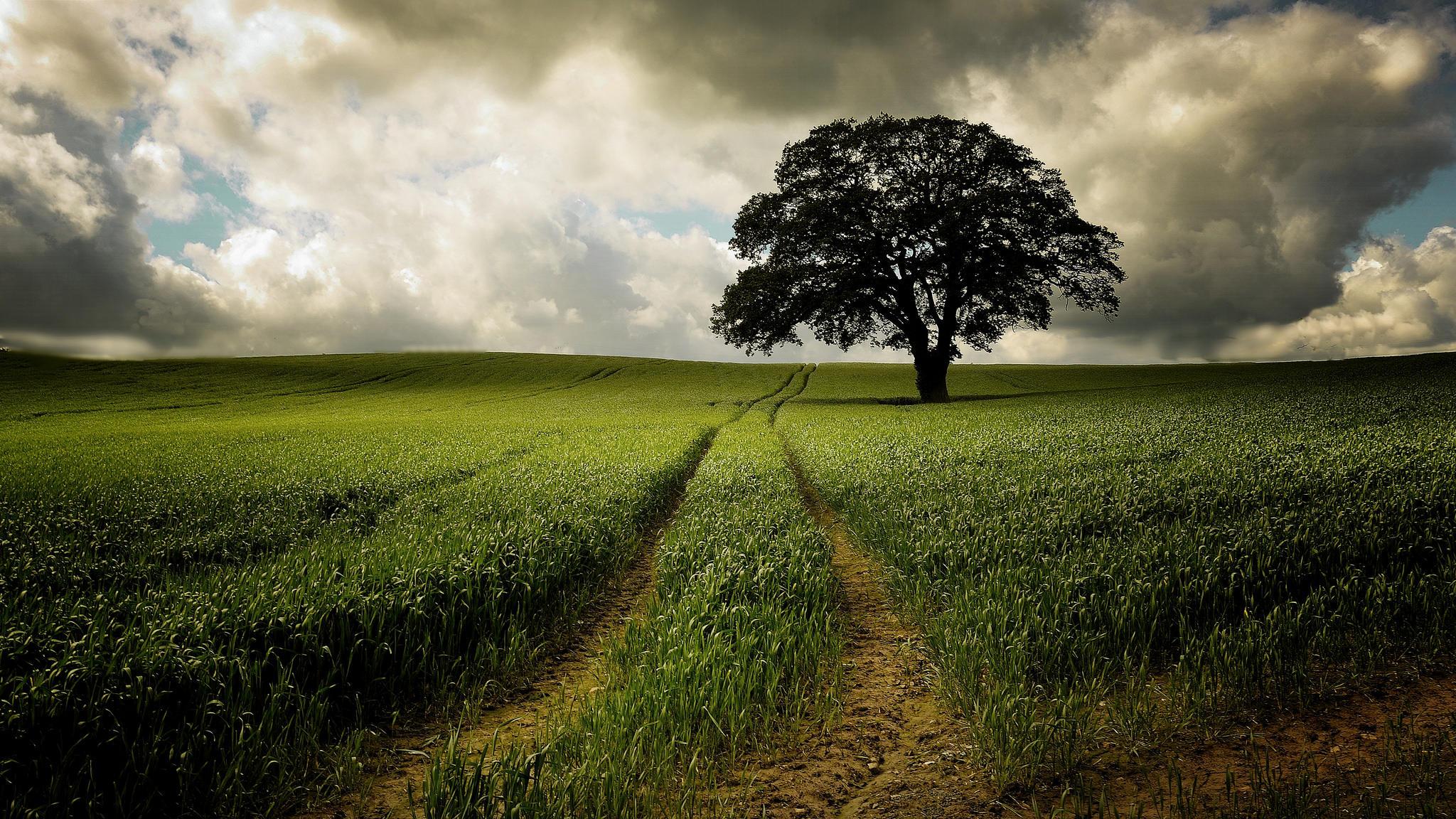 дерево поле  № 439026 бесплатно