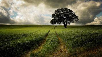 Фото бесплатно поле, трава, дерево