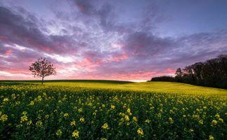 Бесплатные фото закат,поле,деревья,цветы,пейзаж