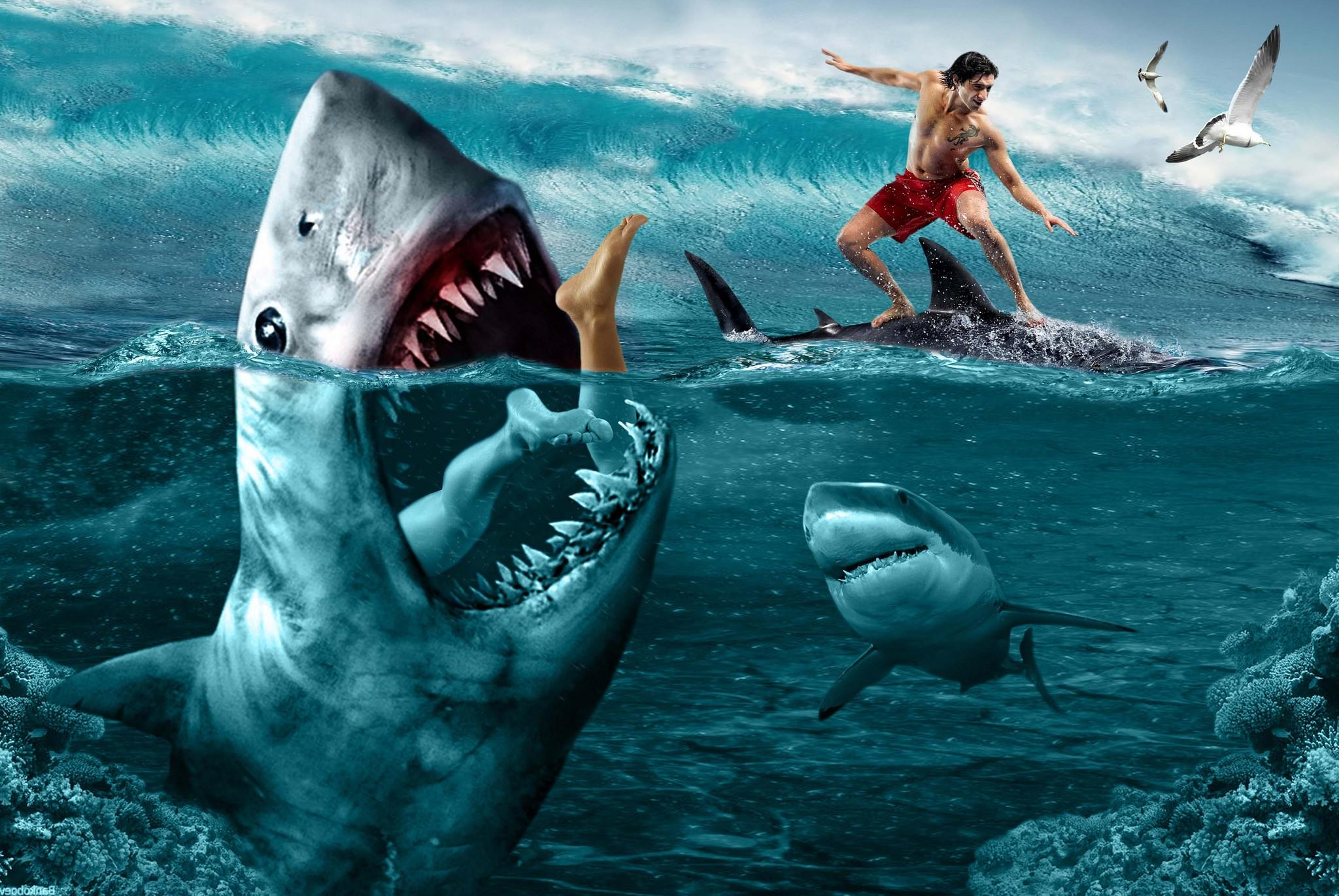 Обои море, серфинг, акулы, опасность