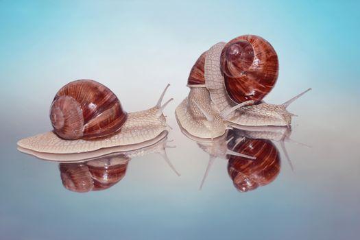 Photo free snail, Gastropods, gastropods