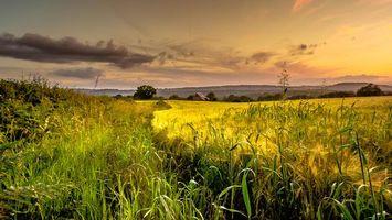 Фото бесплатно уши, пейзаж, дом