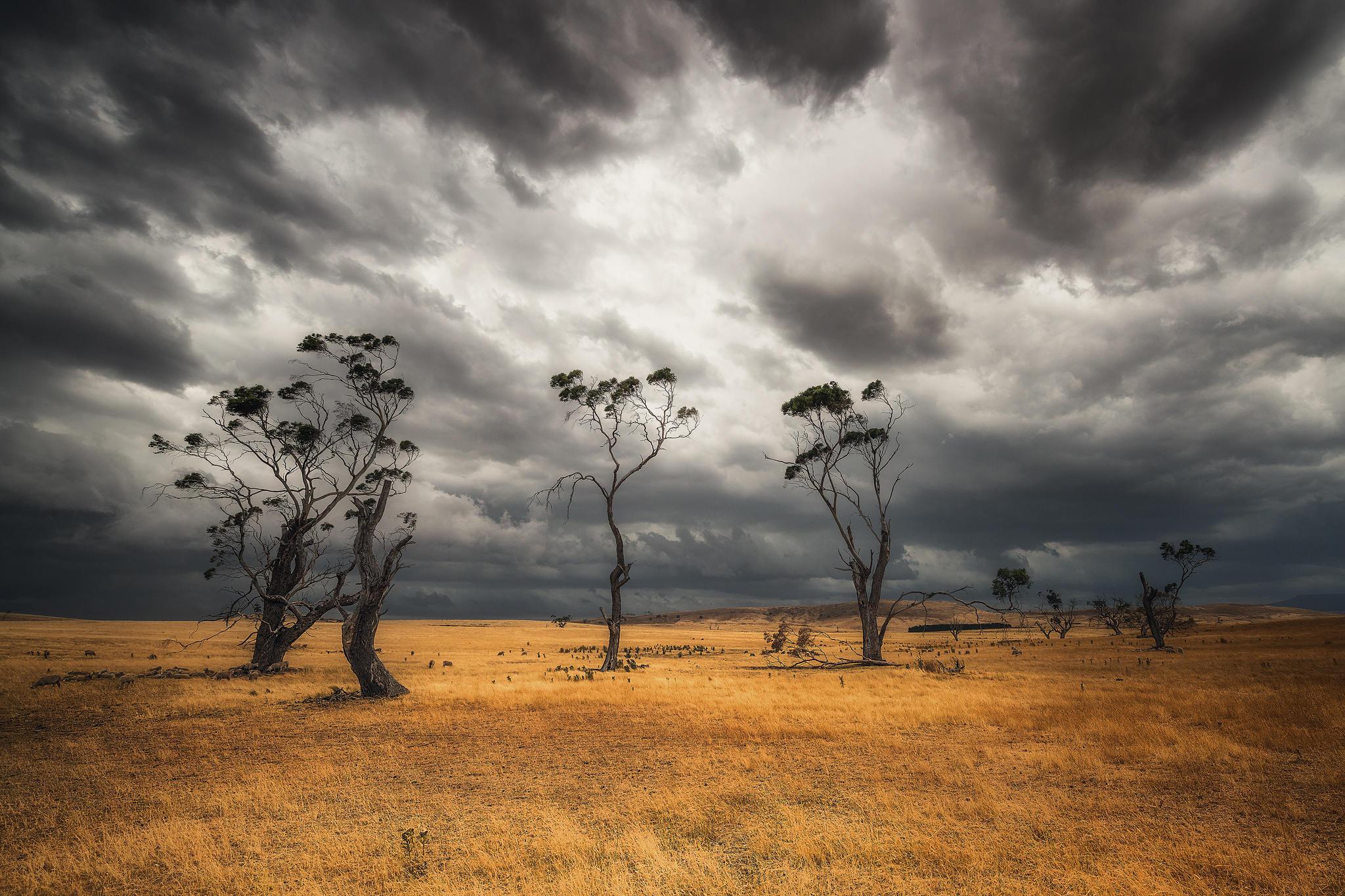 Австралия, поле, тучи, деревья, пейзаж