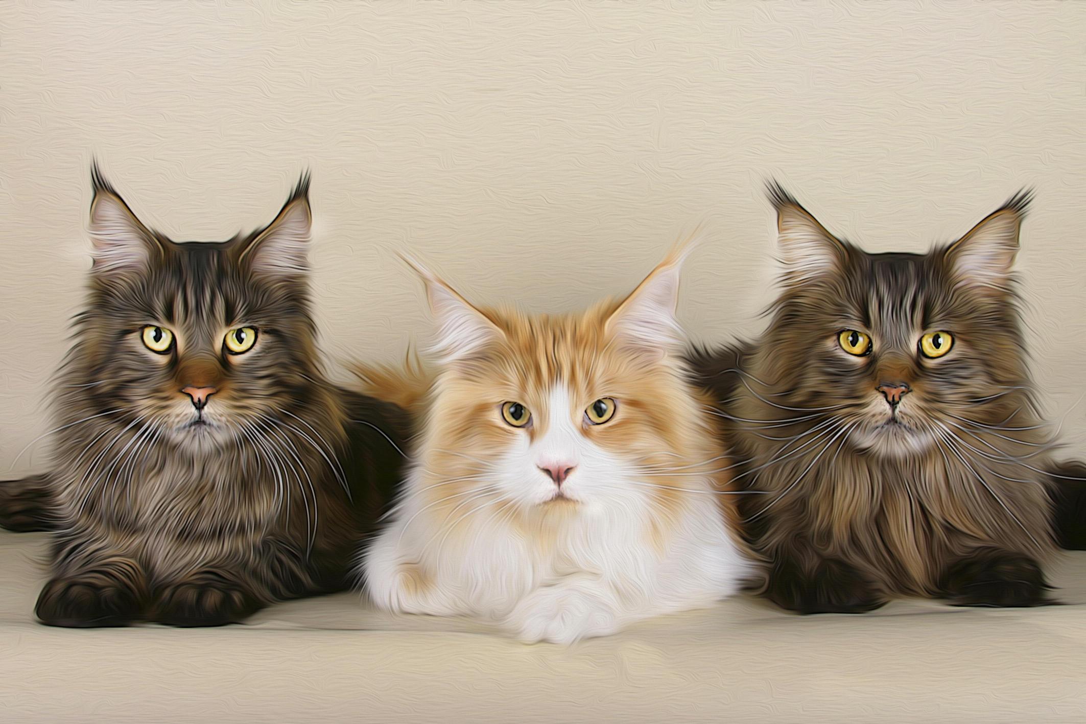 Обои кошки, коты, art, фотошоп