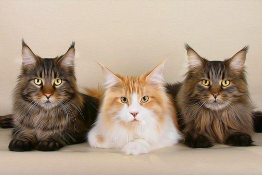 Фото бесплатно кошки, коты, art