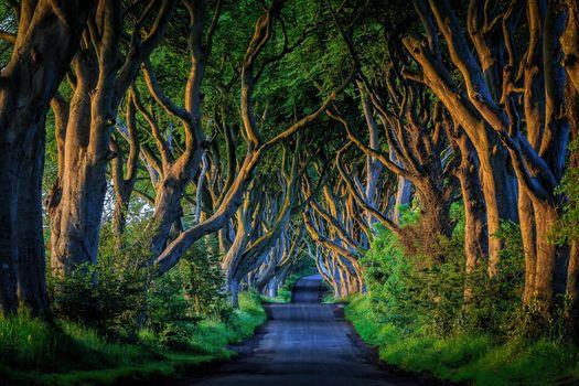 Фото бесплатно Северная Ирландия, дорога, аллея