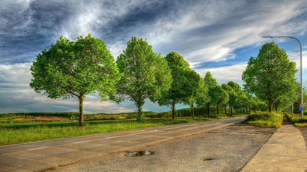 Beautiful wallpapers field, trees desktop