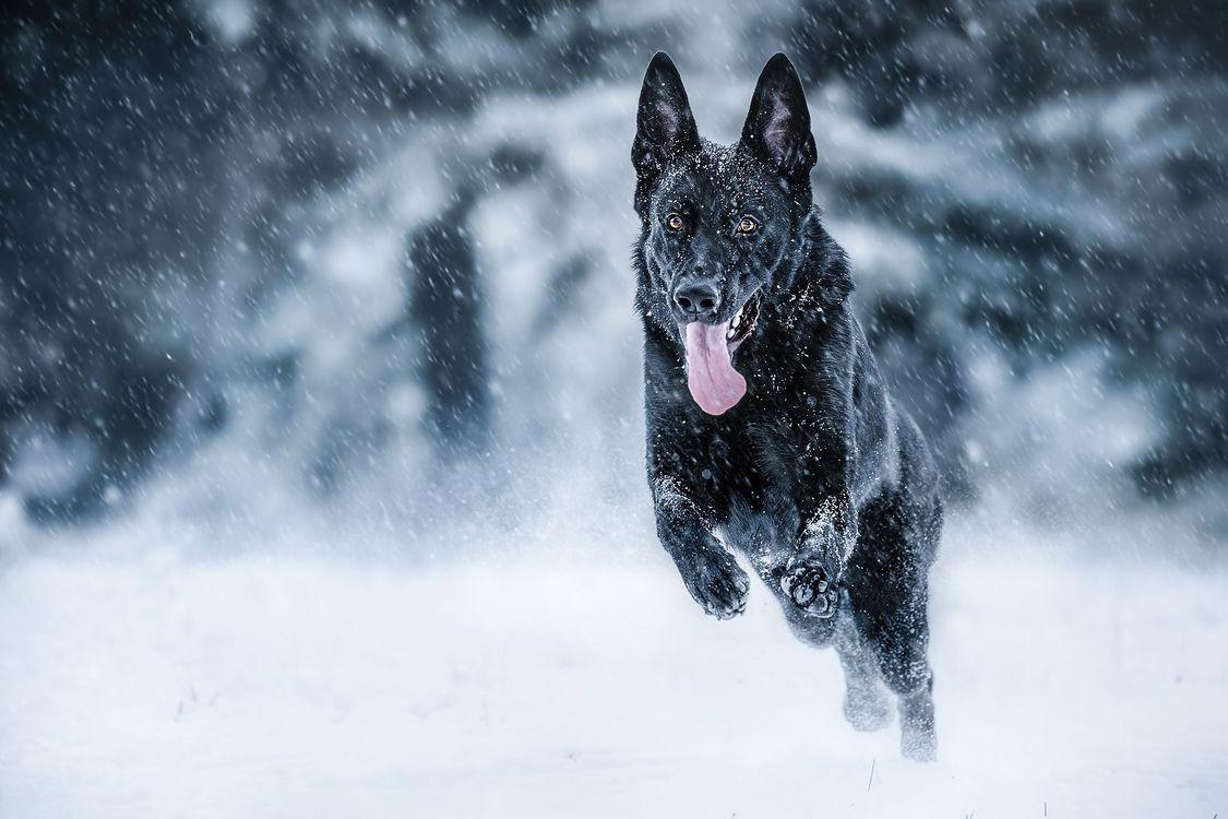 Фото собака, домашнее животное онлайн бесплатно