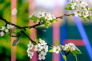 Бесплатные фото ветка,яблоня,весна,цветы,флора