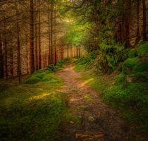 Бесплатные фото лес, тропинка, деревья, пейзаж