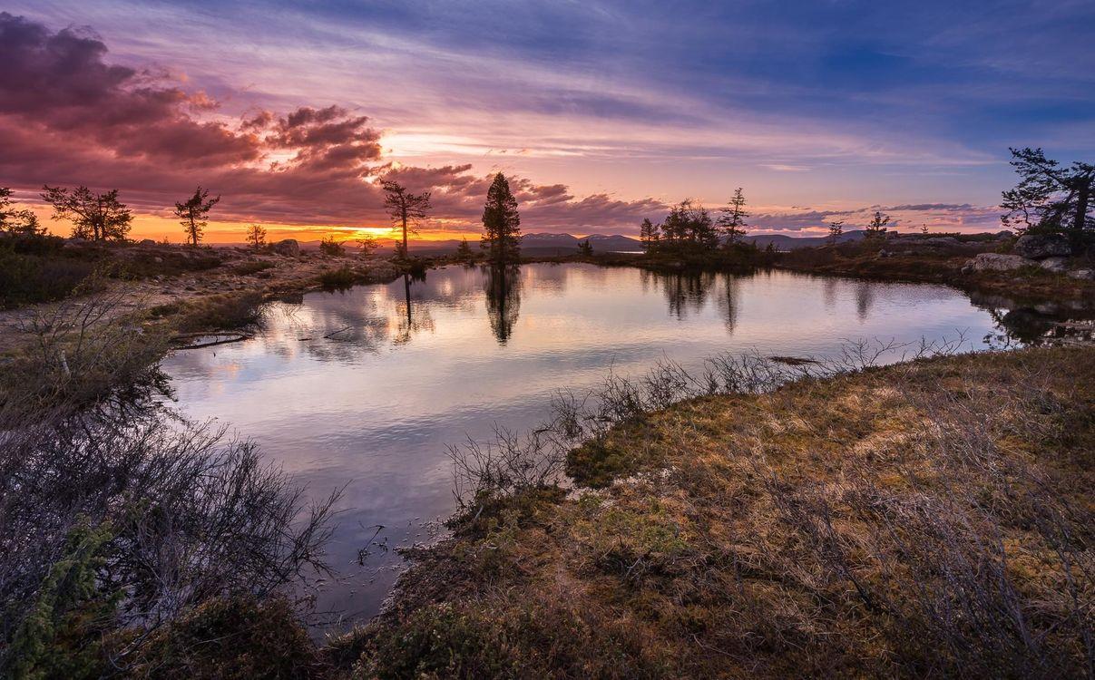 Фото бесплатно закат, озеро, деревья, пейзаж, пейзажи