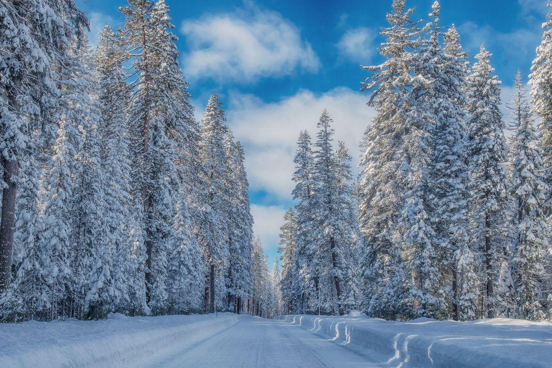 Обои зима, дорога, лес, деревья, пейзаж, Crater Lake National Park на телефон | картинки пейзажи