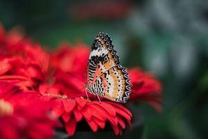 Обои размытость, яркий, крылья, бабочка, природа, цветок