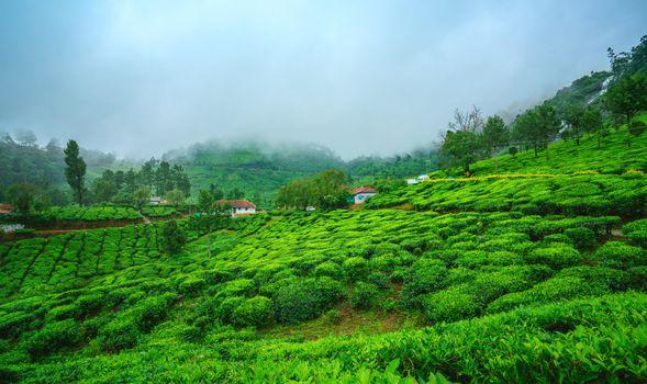 Фото бесплатно Munnar, Kerala, India