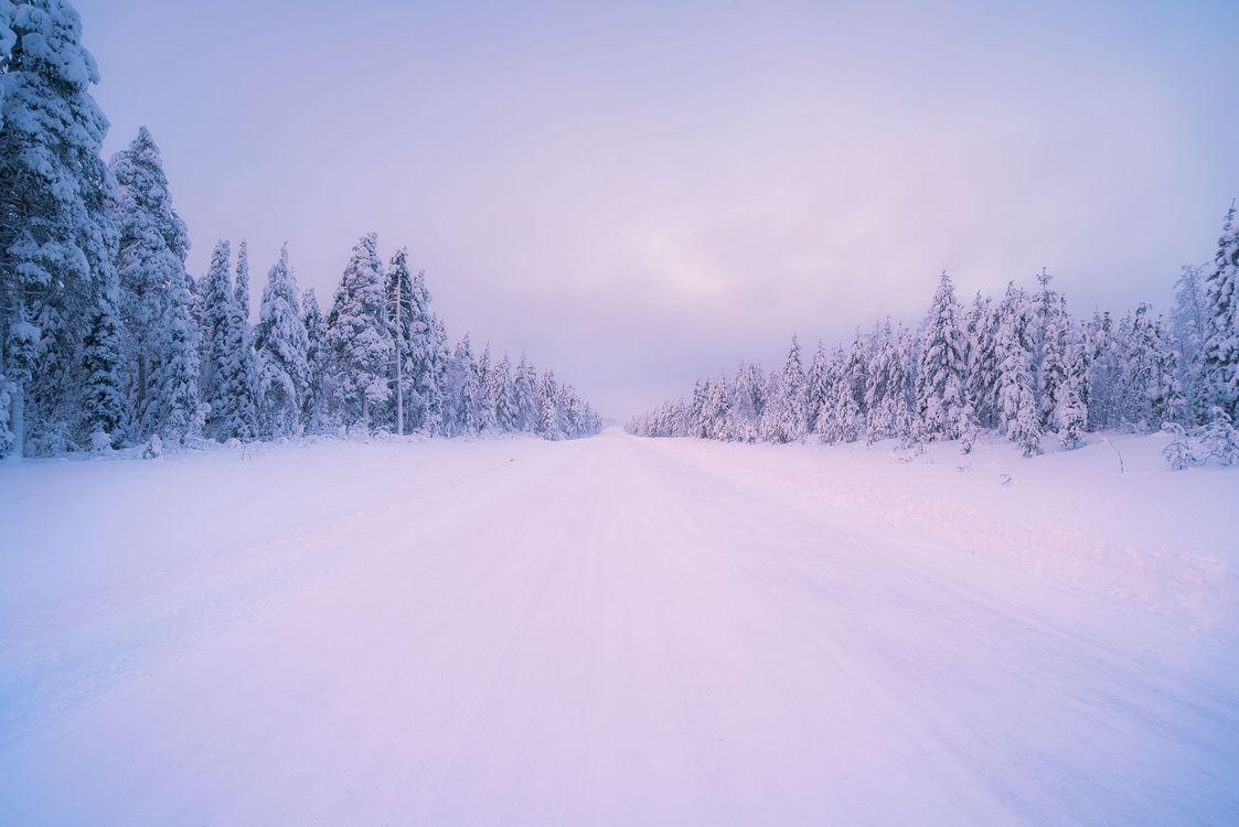 Фото бесплатно зима, дорога, лес, деревья, пейзаж, пейзажи