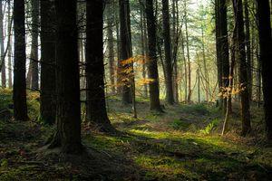 Фото бесплатно лес, деревья, природа