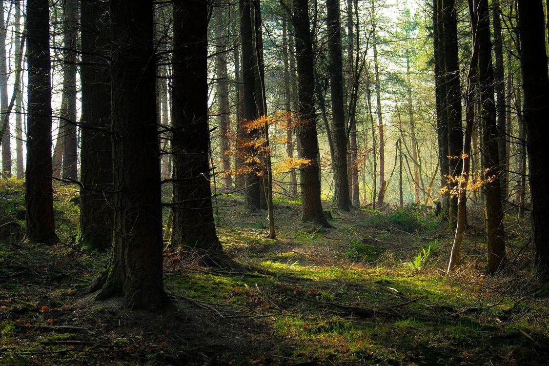 Обои лес, деревья, природа на телефон | картинки природа