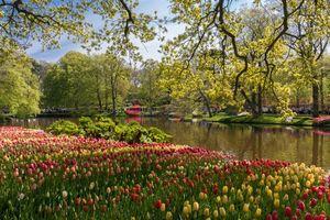 Фото бесплатно Кёкенхоф Лисс, Южная Голландия, Нидерланды