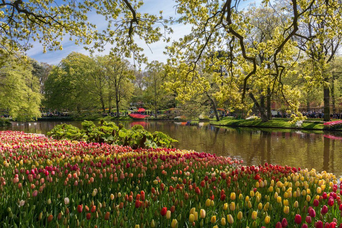Картинка Кёкенхоф Лисс, Южная Голландия, Нидерланды, пруд, парк, сад, деревья пейзаж на рабочий стол. Скачать фото обои пейзажи