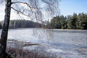 Бесплатные фото река,лес,деревья,пейзаж