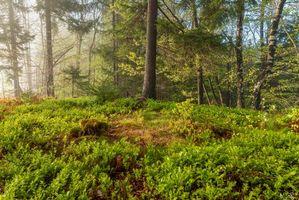 Заставки лес, деревья, природа