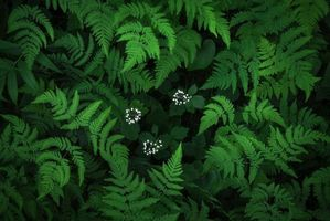 Photo free Fern, plant, flora