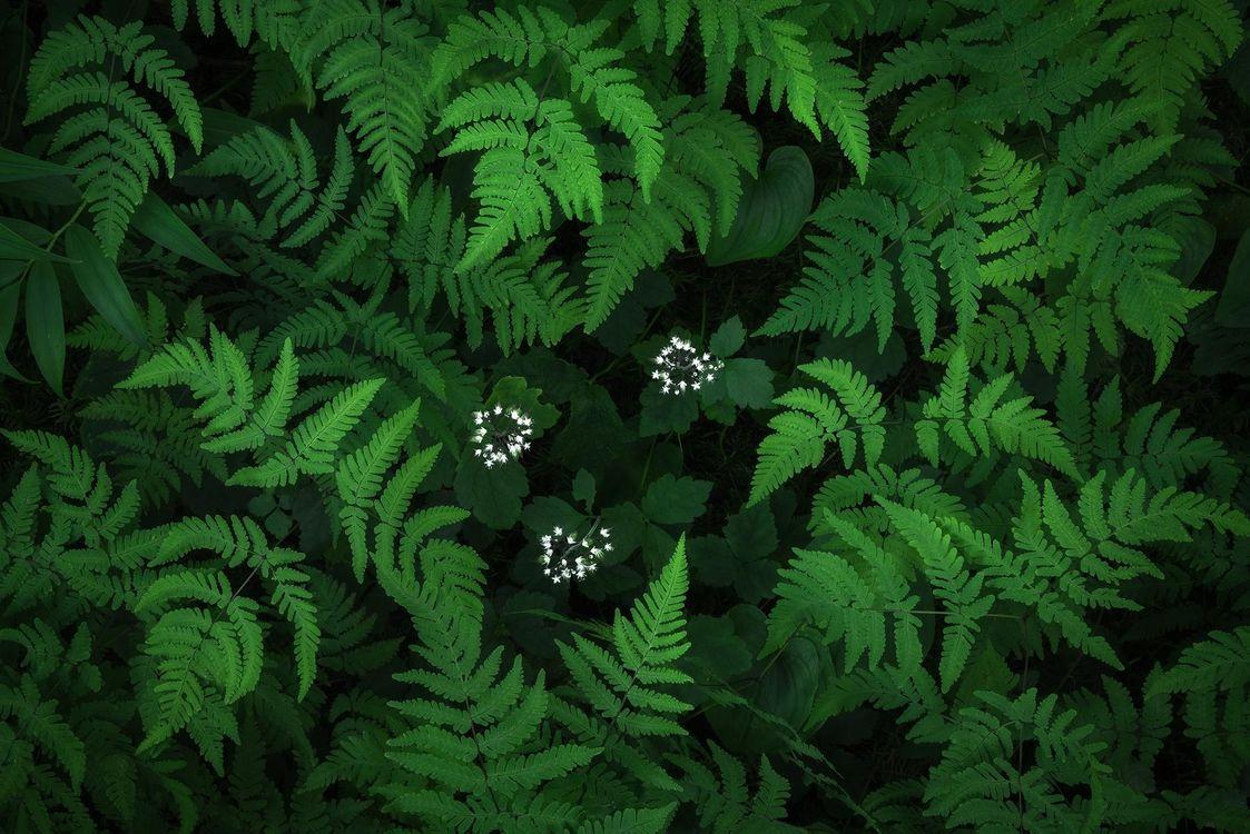 Обои Папоротник, растение, флора картинки на телефон