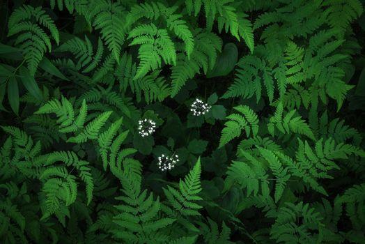 Заставки Папоротник, растение, флора