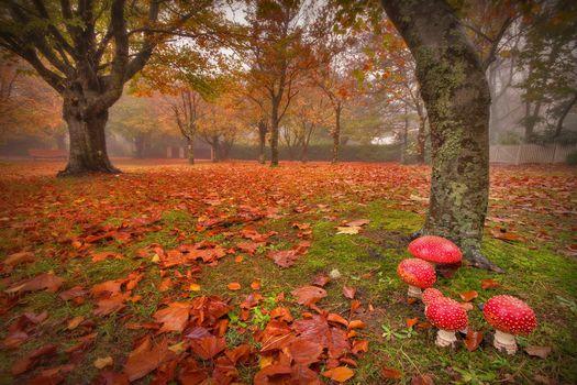 Фото бесплатно осень, грибы, туман