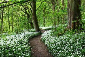 Бесплатные фото лес,деревья,цветы,природа