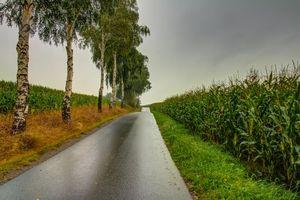 Бесплатные фото поле,дорога,деревья,тучи,пейзаж