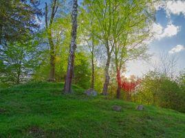 Фото бесплатно холмы, закат, лес