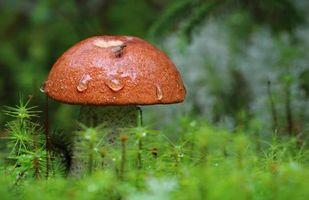 Бесплатные фото гриб, подосиновик, мох, макро